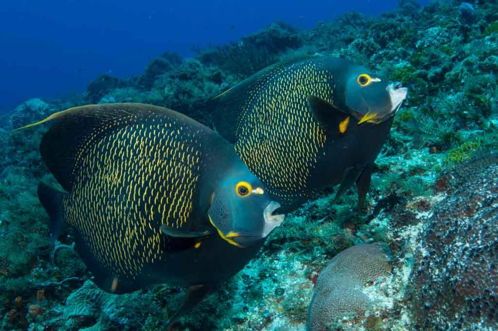 fish cozumel