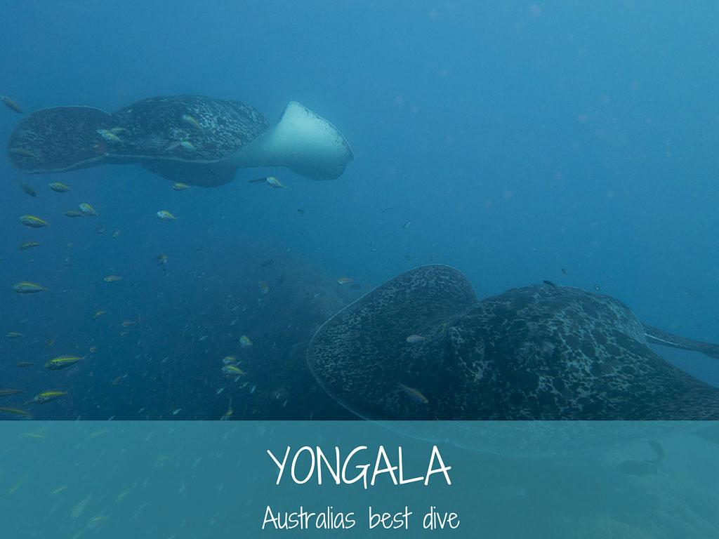 yongala australia