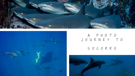 underwater photo journey to socorro