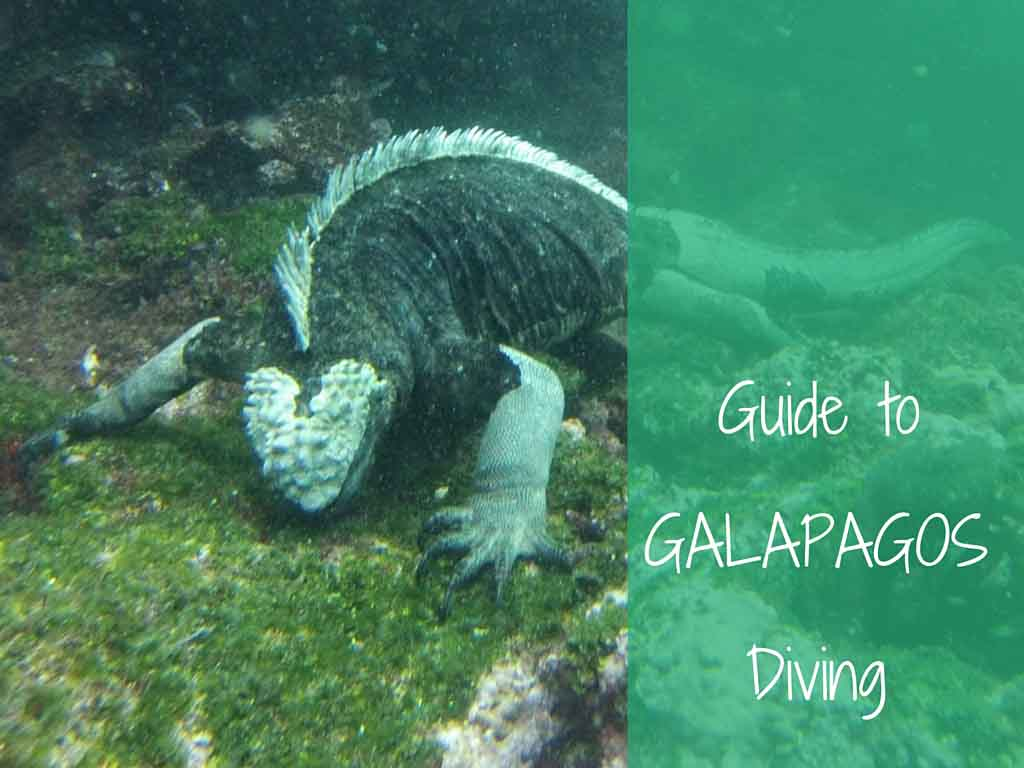 Guide to Galapagos diving