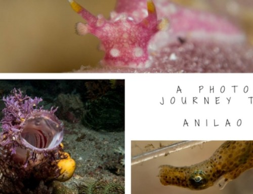 A photo journey to Anilao