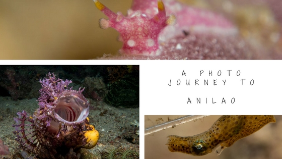 underwater photo journey anilao