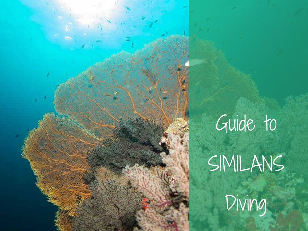guide to similan diving