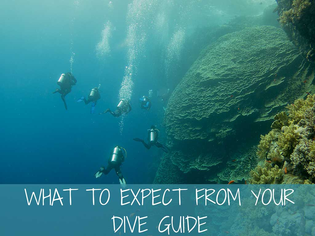 what to expect from your dive guide