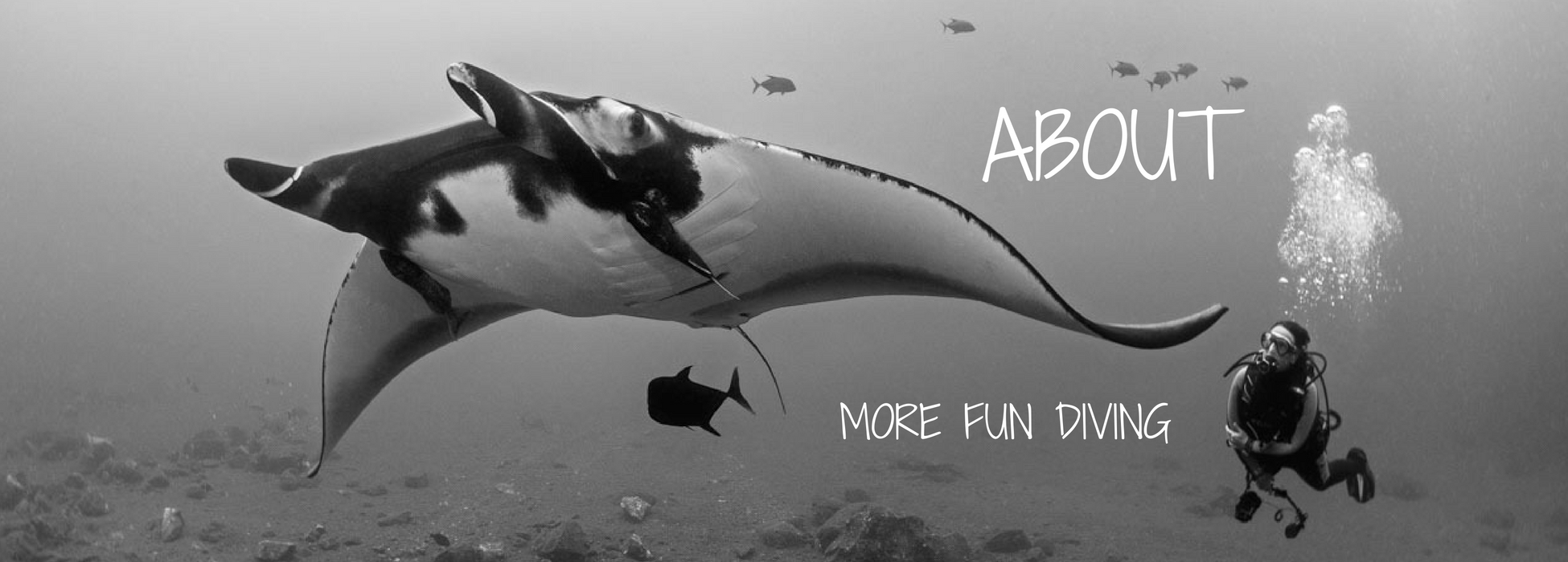 about morefundiving