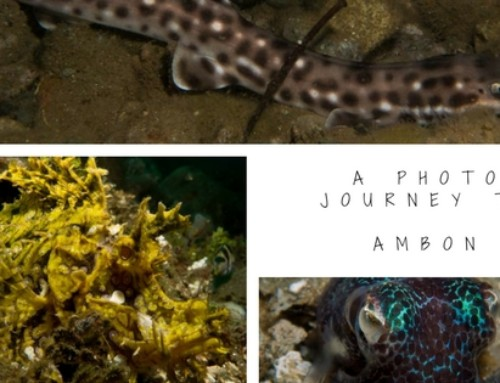 A photo journey to Ambon