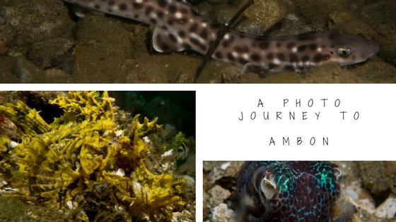 underwater photo journey to ambon