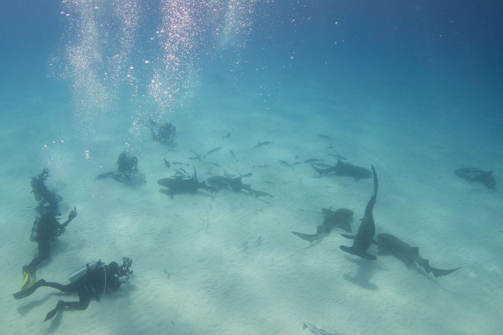 feed sharks