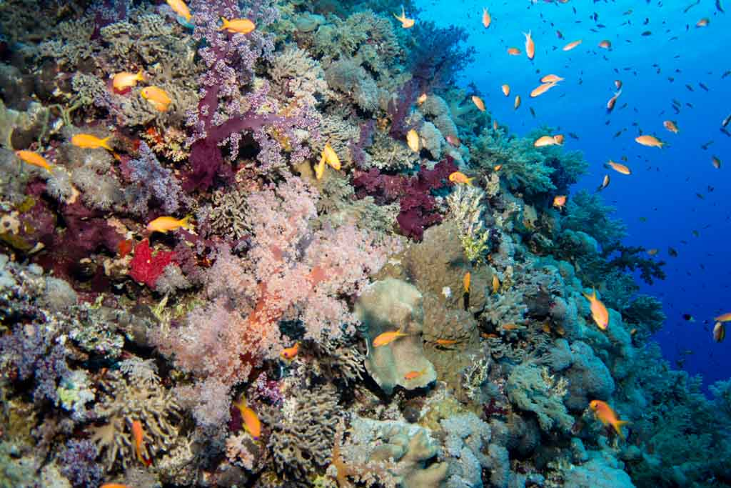 coral reef egypt