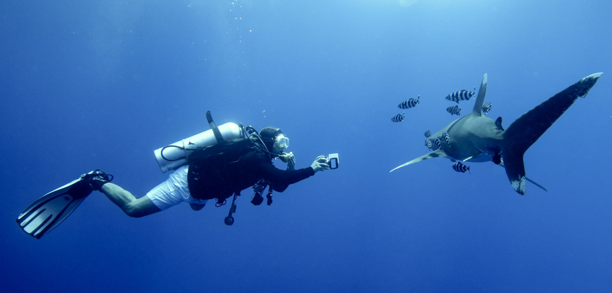diver and longimanus