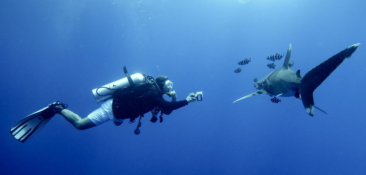 diver and longimanus