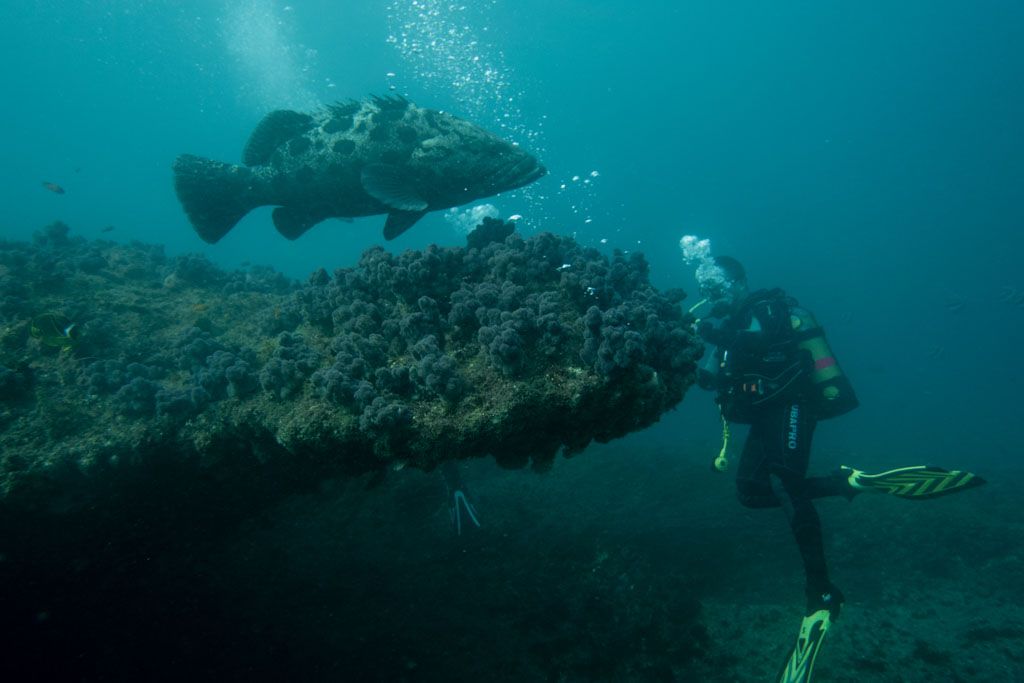 grouper aliwal shoal