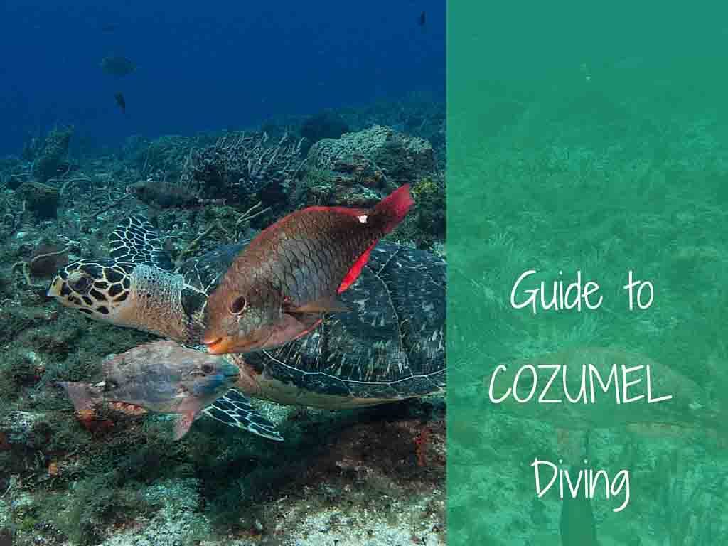 guide to cozumel diving