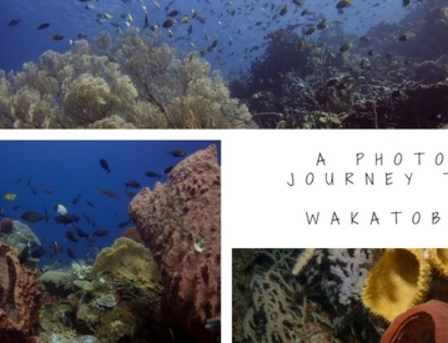 A photo journey to Wakatobi