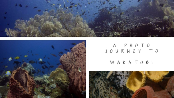 underwater photo journey to wakatobi