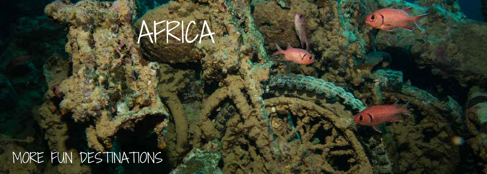 best diving africa