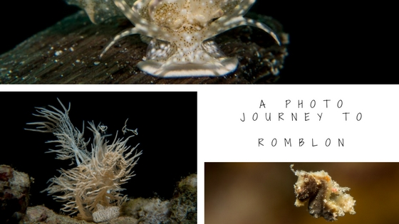 underwater photo journey to romblon