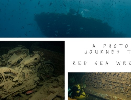 A photo journey to the wrecks of the northern Red Sea