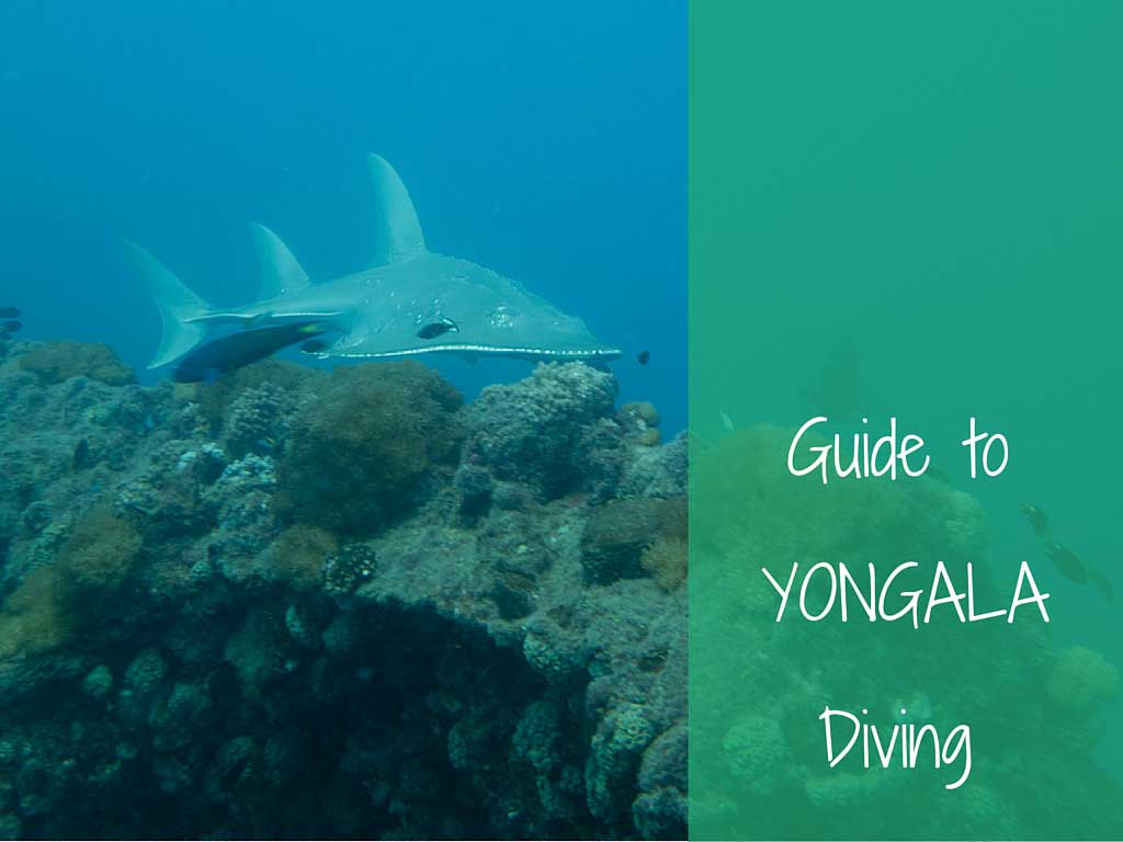 guide to yongala diving