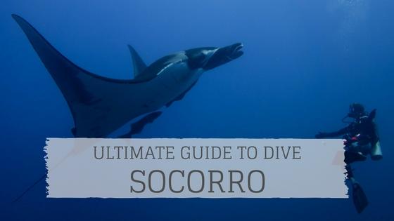 guide to dive socorro