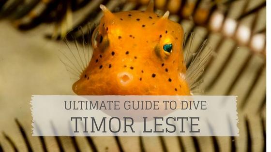 Ultimate Guide to Dive Timor Leste