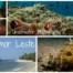 Underwater Photography Timor Leste