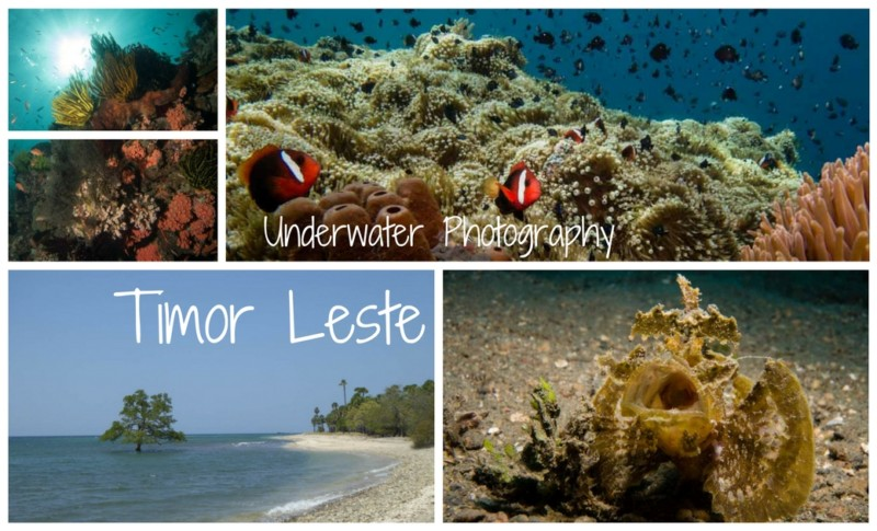 Underwater Photography Timor Leste