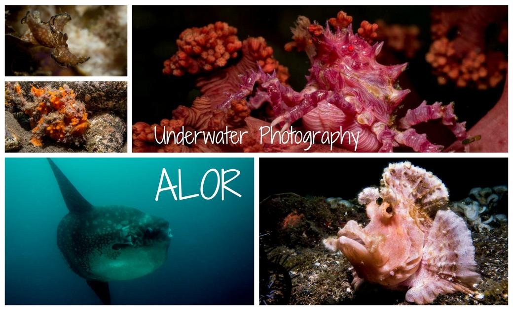 Underwater Photography ALOR