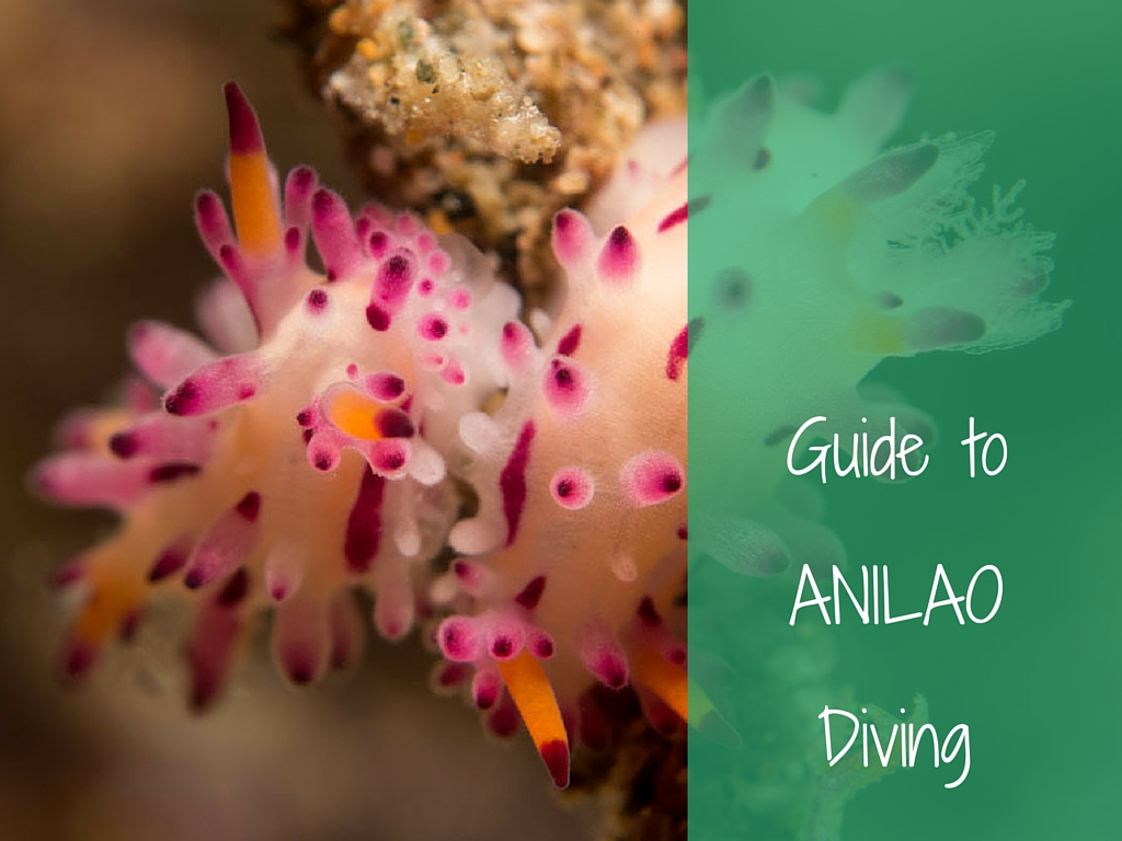 guide to anilao diving