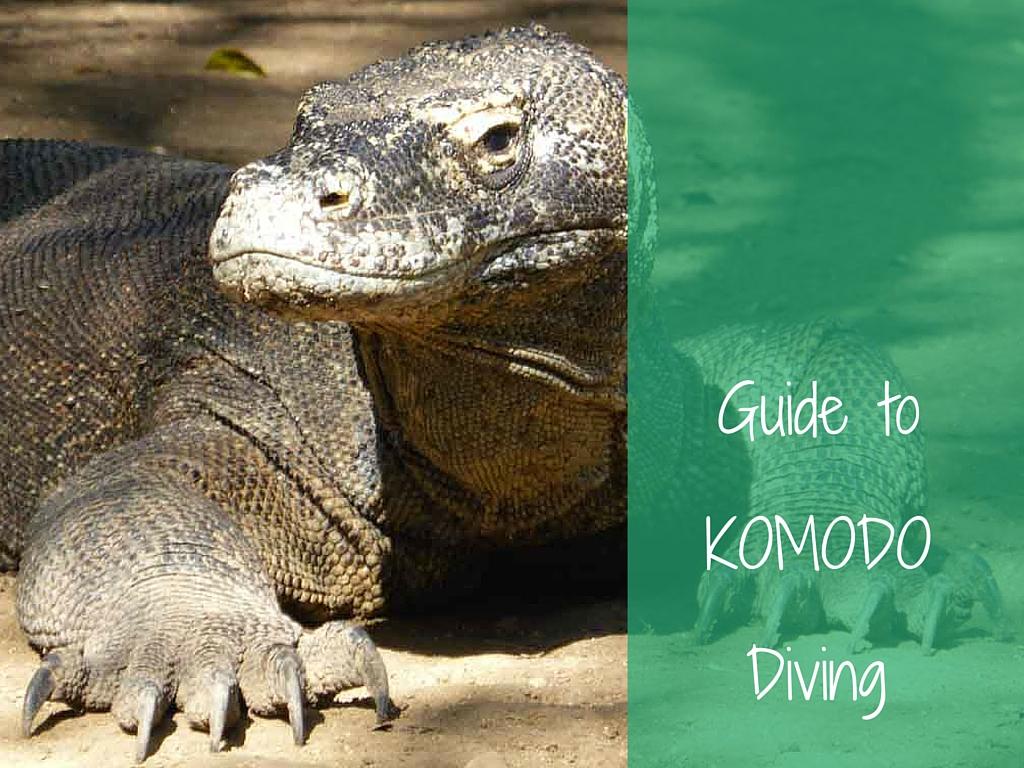 guide to komodo diving