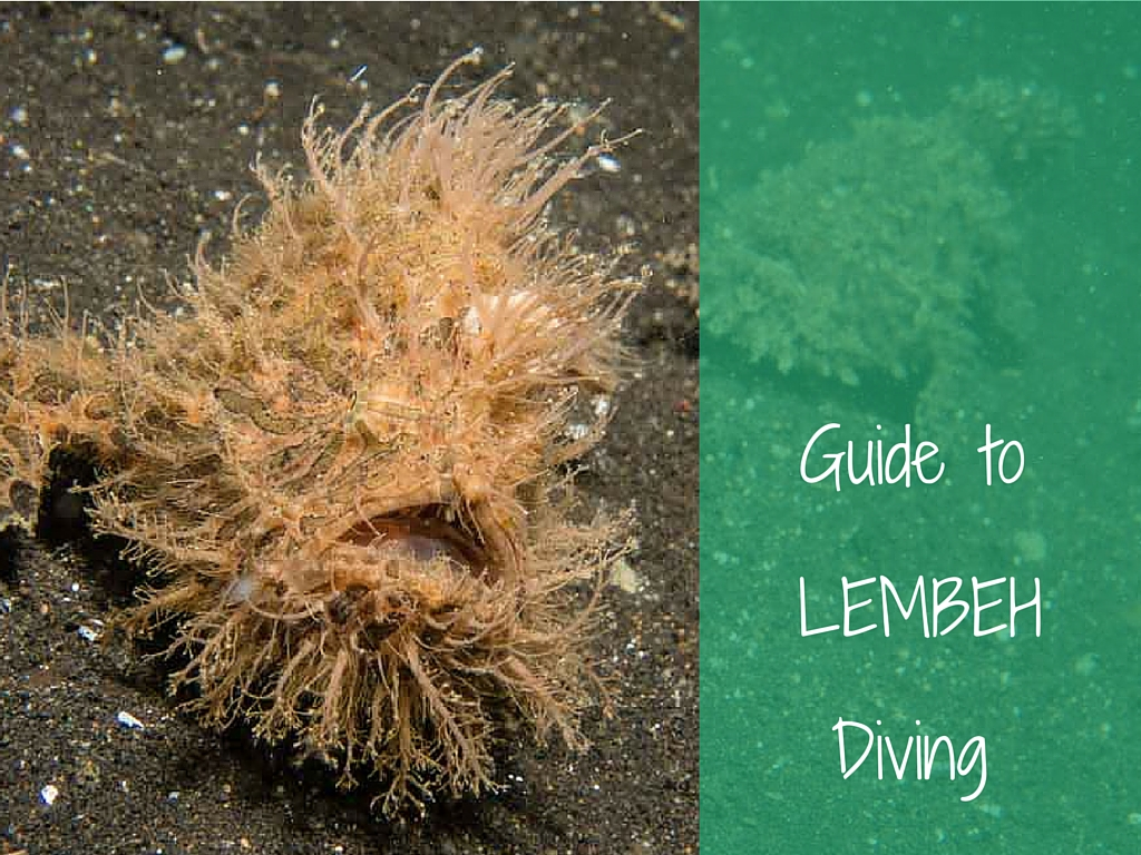 guide to lembeh diving