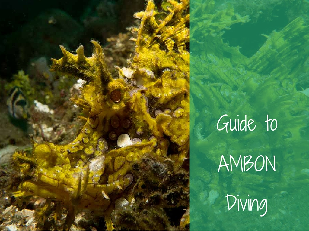guide to ambon diving