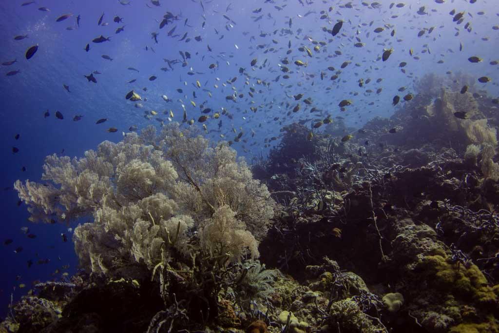 diving wakatobi