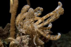 solar powered nudibranch wakatobi
