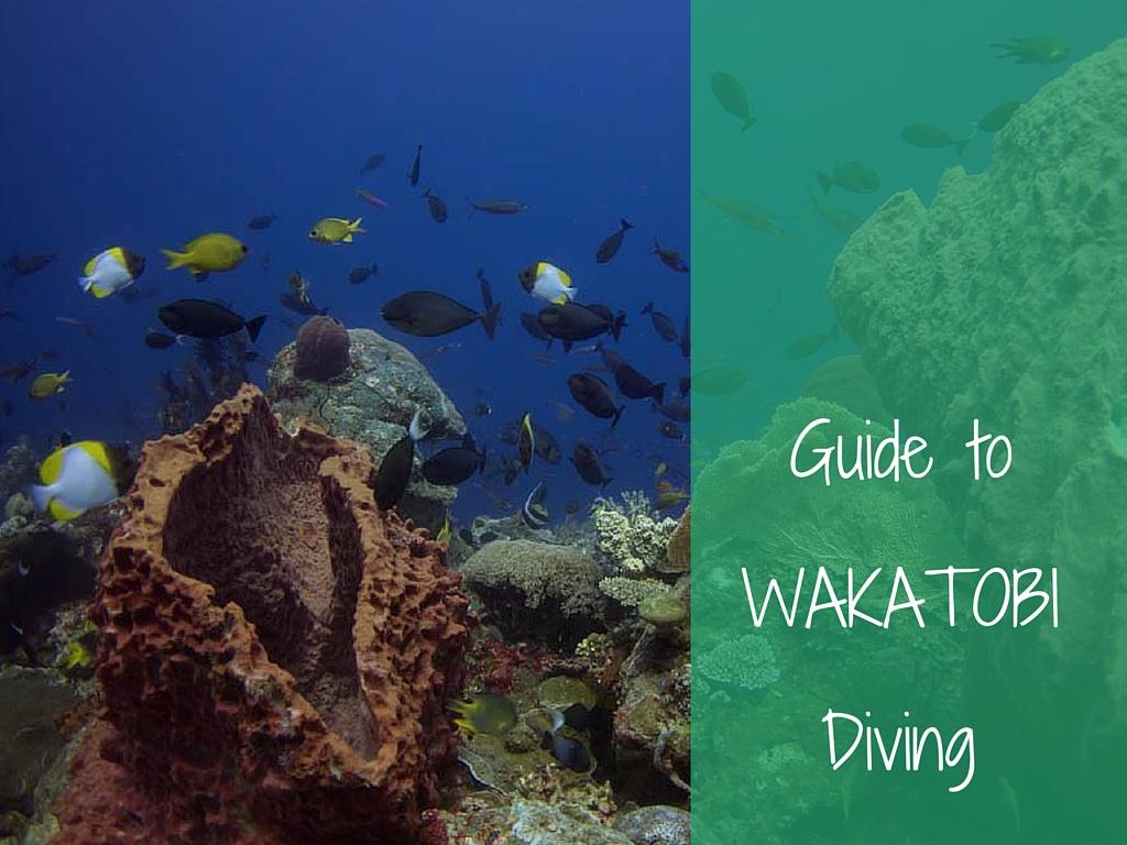 guide to wakatobi diving