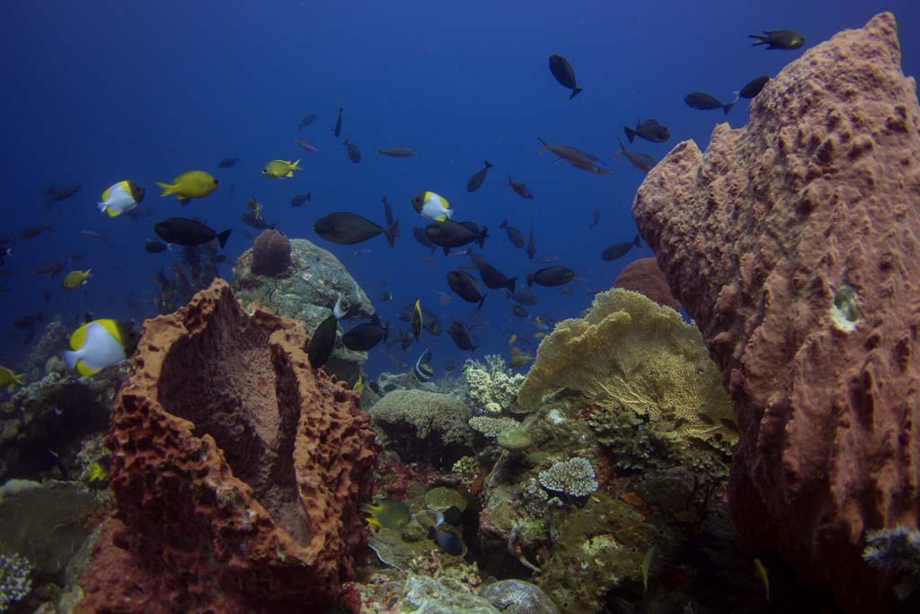 sponges in wakatobi