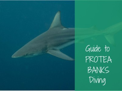 guide to protea banks diving