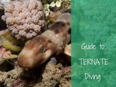 guide to ternate diving
