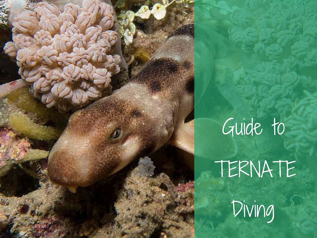 guide to ternate diving