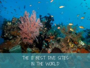 best dive sites