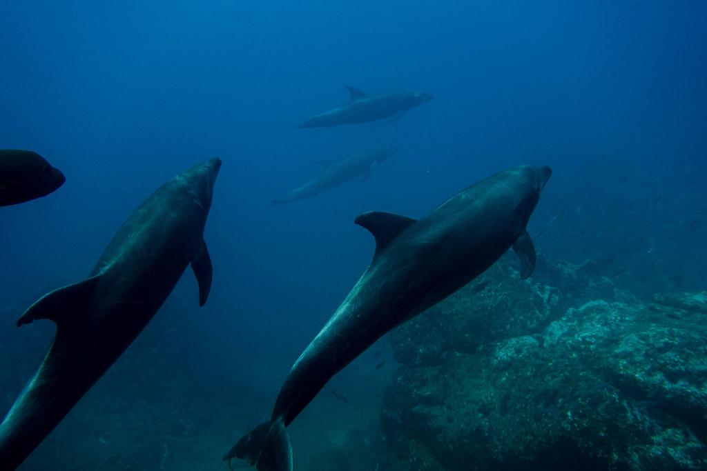 dolphins socorro
