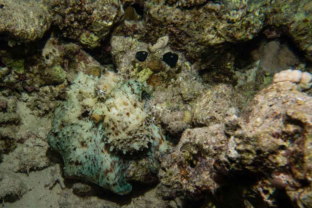 active camouflage octopus