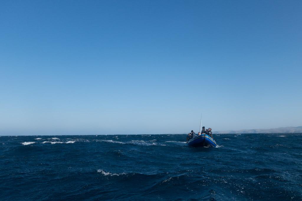 sardine run diving
