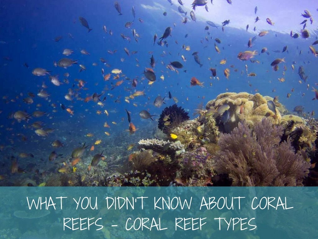 coral reef types