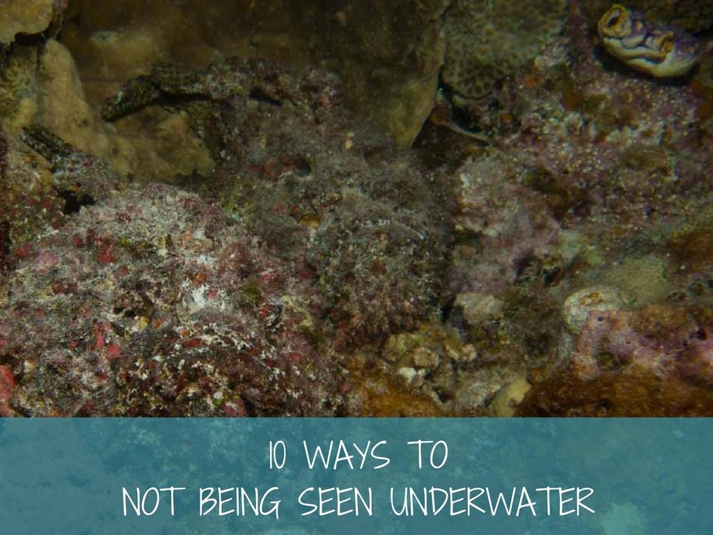 underwater camouflage