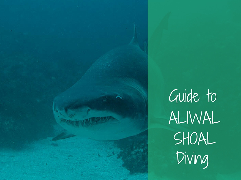 guide to aliwal shoal