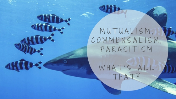 mutualism, commensalism, parasitism