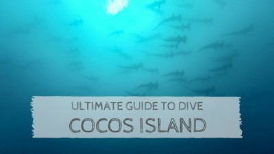 Ultimate Guide to Dive Cocos Island