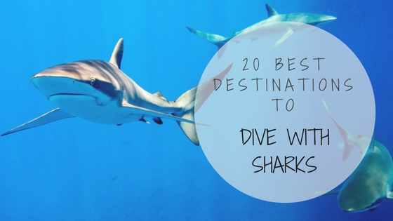20 best destinations to dive with sharks