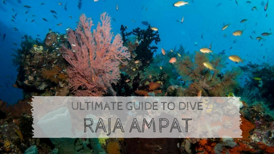 Ultimate Guide to Dive Raja Ampat